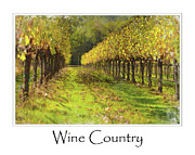 Wine Making Posters - Vineyard Poster by Brandon Bourdages