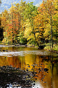 Williams Photos - Williams River Autumn by Thomas R Fletcher
