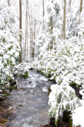 Williams Photos - Winter in Monongahela National Forest by Thomas R Fletcher