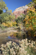 Patriarch Prints - Zion Autumn foliage Print by Pierre Leclerc