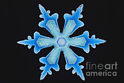 Resin Photos - Snowflake by Science Source