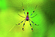 Spider Digital Art Prints - 42- Come Closer Print by Joseph Keane