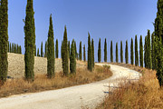 Lane Photo Prints - Tuscany Print by Joana Kruse