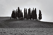 Cypress Trees Framed Prints - Tuscany Framed Print by Joana Kruse
