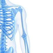 X-ray Image Art - Upper Body Bones, Artwork by Sciepro