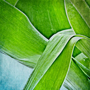 Green Leafs Posters - Abstract Poster by Kristin Kreet
