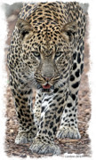 Cat Photo Framed Prints - African Leopard Framed Print by Larry Linton