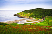 Hilly Prints - Atlantic coast in Newfoundland Print by Elena Elisseeva