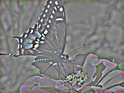 Haze Mixed Media Metal Prints - Butterfly Collection Metal Print by Debra     Vatalaro
