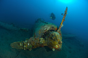 Kimbe Bay Posters - Diver Explores The Wreck Poster by Steve Jones