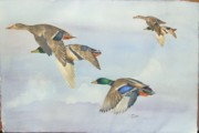 Ducks Paintings - 5 Ducks by Diane Ziemski