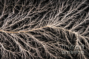 Electric Current Posters - Electrical Discharge Lichtenberg Figure Poster by Ted Kinsman
