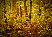 Golden Leaves.beauty Prints - Fall forest Print by Elena Elisseeva