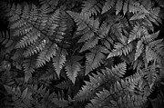 Steve Patton - Ferns