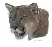 Florida Wildlife Posters - Florida Panther Poster by Larry Linton