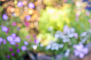 Flower Blooming Photos - Flower garden in sunshine by Elena Elisseeva