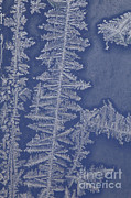 Frost Photos - Frost On A Window by Ted Kinsman