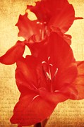 Northwest Flowers Posters - Gladiola Poster by Cathie Tyler