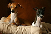 Greyhound Photos - Italian Greyhounds by Angela Rath