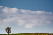Vineyard Landscape Posters - Lonely tree Poster by Mats Silvan