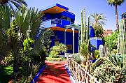 Northern Africa Metal Prints - Majorelle Garden Marrakesh Morocco Metal Print by Ralph Ledergerber
