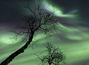 Bare Trees Metal Prints - Northern Lights In The Arctic Metal Print by Arild Heitmann