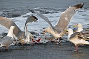 Seagulls Print by Debra  Miller