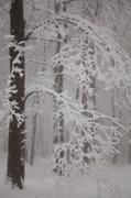 Winter Print by Gabriela Insuratelu