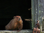 Groundhog Digital Art - 5003-Groundhog by Martha Abell