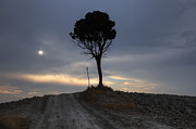 Pine Photos - Tuscany by Joana Kruse
