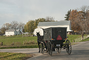 Amish Buggy Photos - Amish Buggy by David Arment