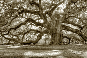 Shadows Photo Prints - Angel Oak Live Oak Tree Print by Dustin K Ryan