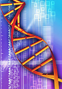 Genetics Prints - Dna Molecule Print by Pasieka