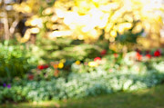 Flower Gardens Photo Prints - Flower garden in sunshine Print by Elena Elisseeva