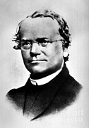 Breeding Posters - Gregor Mendel, Father Of Genetics Poster by Science Source