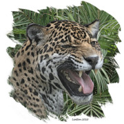 Jaguar Digital Art - Jaguar by Larry Linton