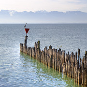 Poles Photos - Lake Constance by Joana Kruse
