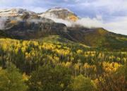 Yellow Leaves Framed Prints - Mount Timpanogos in Autumn Framed Print by Utah Images