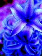 My Blue Heaven Print by Allen n Lehman