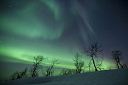 Bare Trees Prints - Northern Lights In The Arctic Print by Arild Heitmann