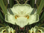 Blend Photos - Pampas Flower by Michele Caporaso