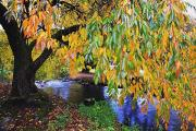 Colors Of Autumn Framed Prints - Portland, Oregon, United States Of Framed Print by Craig Tuttle