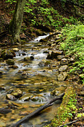 Rushing Mountain Stream Print by Thomas R Fletcher
