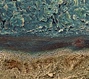 Layer Photo Posters - Skin Layers, Sem Poster by Steve Gschmeissner