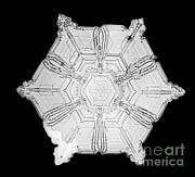 Snowflake Print by Science Source