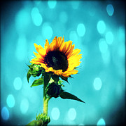 Northwest Flowers Posters - Sunflower Poster by Cathie Tyler