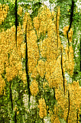 Vibrant Color Art - Tree Bark by John Foxx