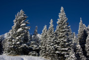 Winter Storm Photo Originals - Winter by Mark Smith