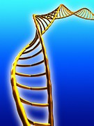 Double Helix Art - Dna Helix by Pasieka