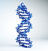 Art Product Prints - Dna Molecule, Artwork Print by Andrzej Wojcicki